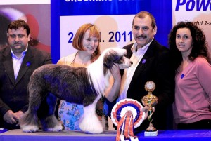 SGS 2011 klasa Work Shop 1 lokata model -ROMA berded collie